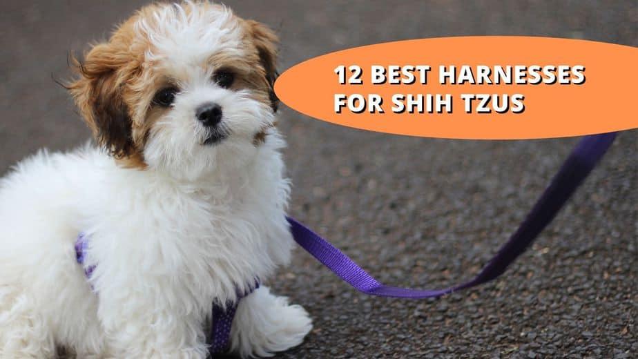 best harness for shih tzu
