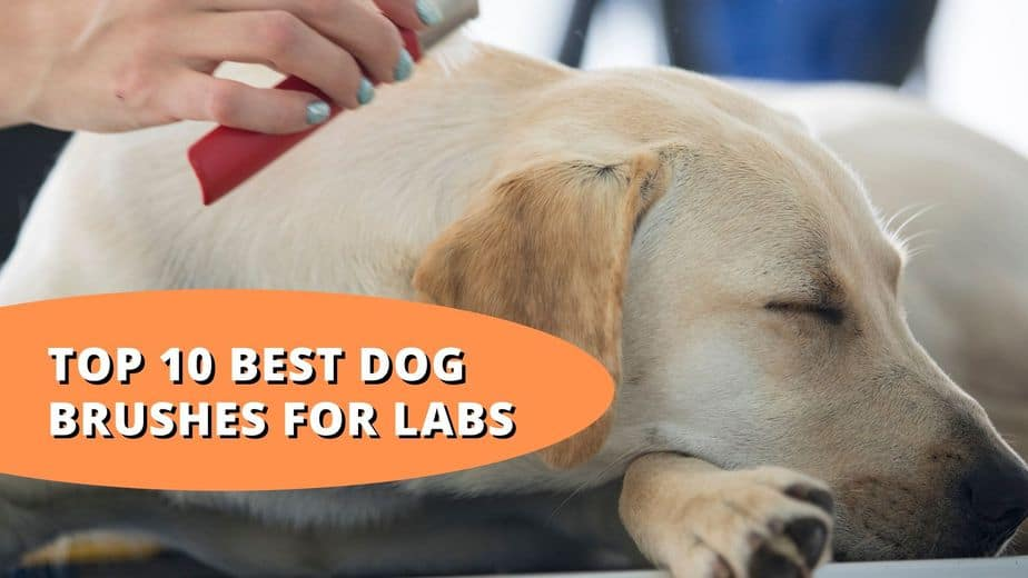 best dog brush for labs