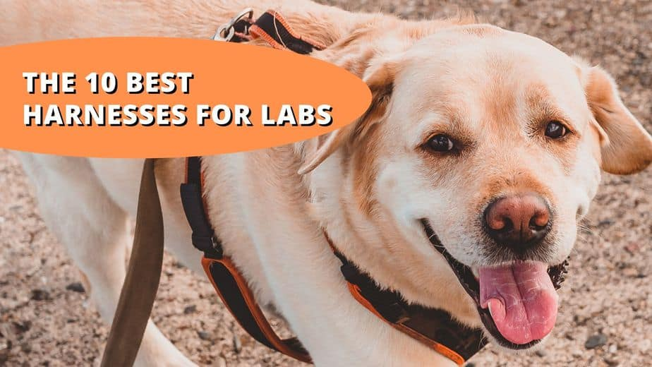 best harness for labs