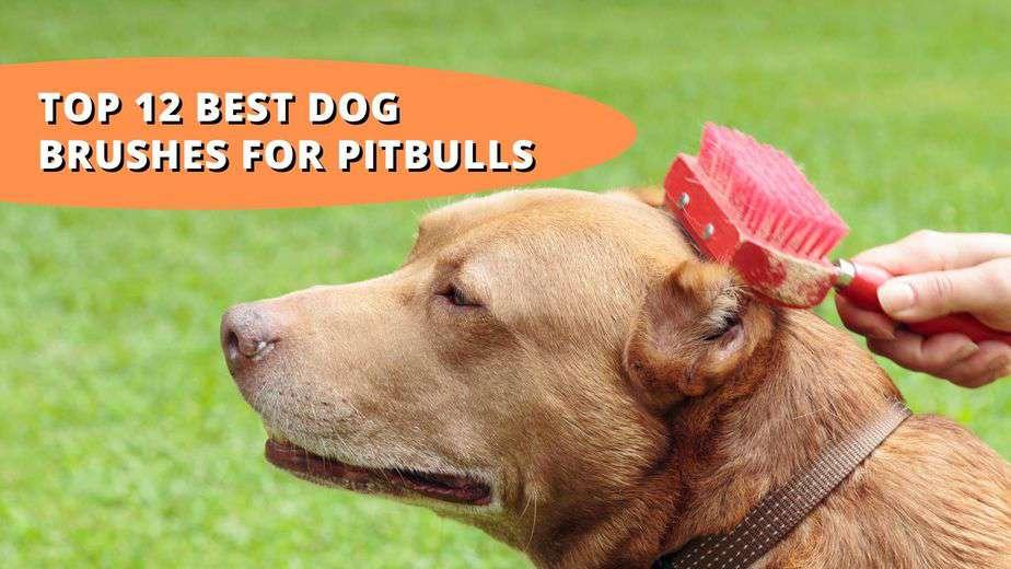best brush for pitbull