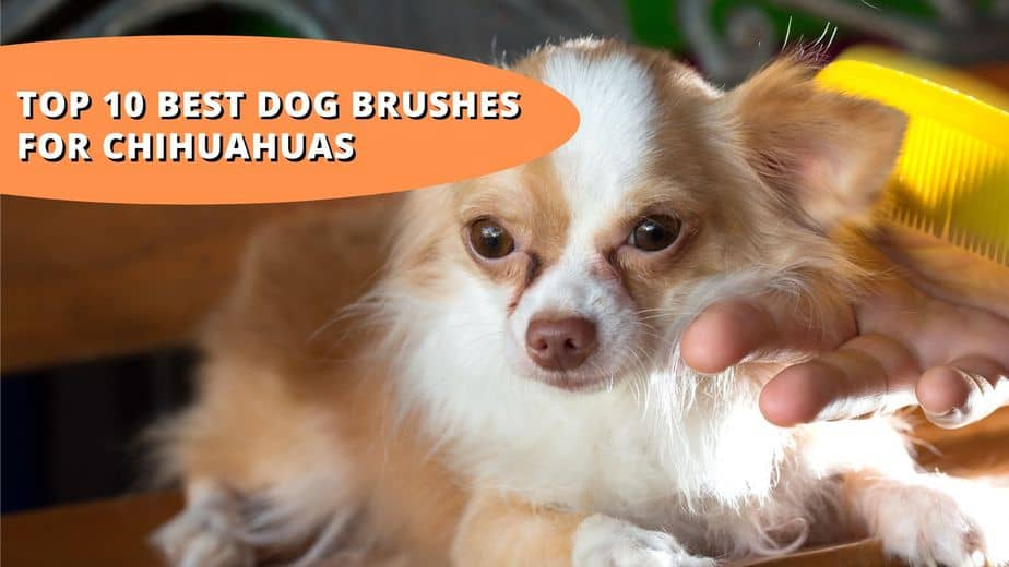 best brush for chihuahua