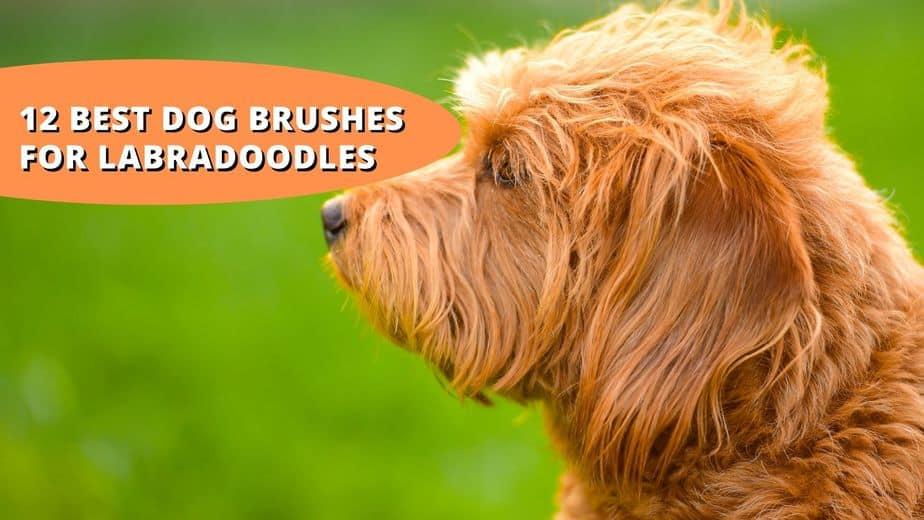 best dog brush for labradoodle