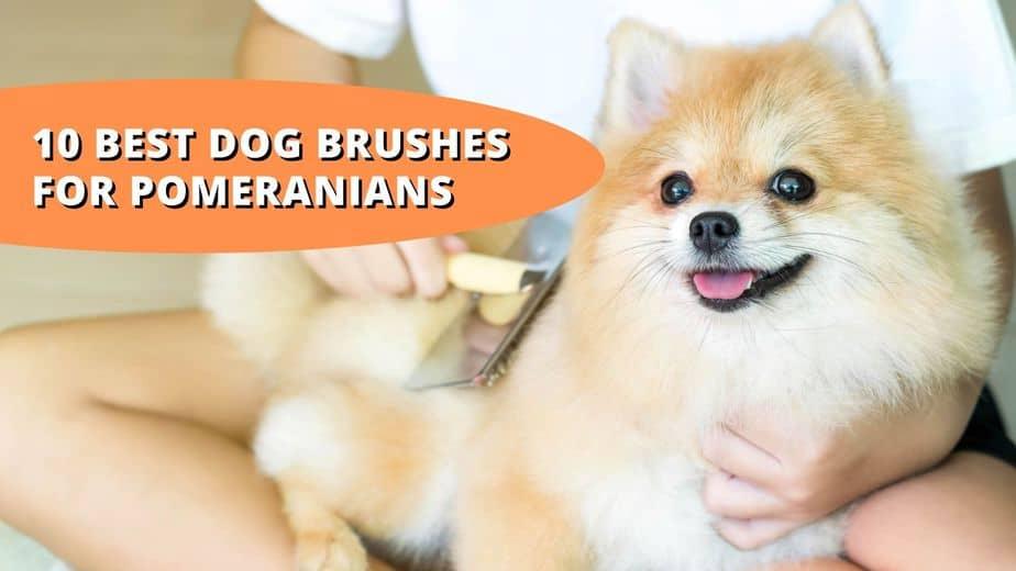 best brush for pomeranian