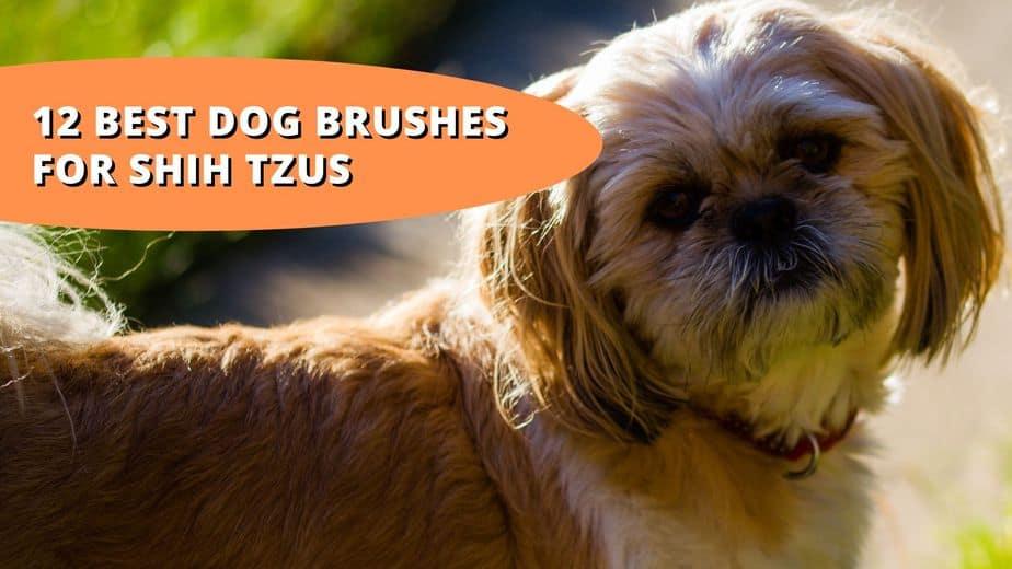 best brush for shih tzu