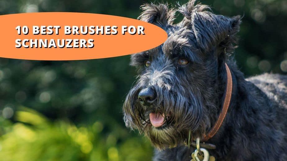 best brush for schnauzer