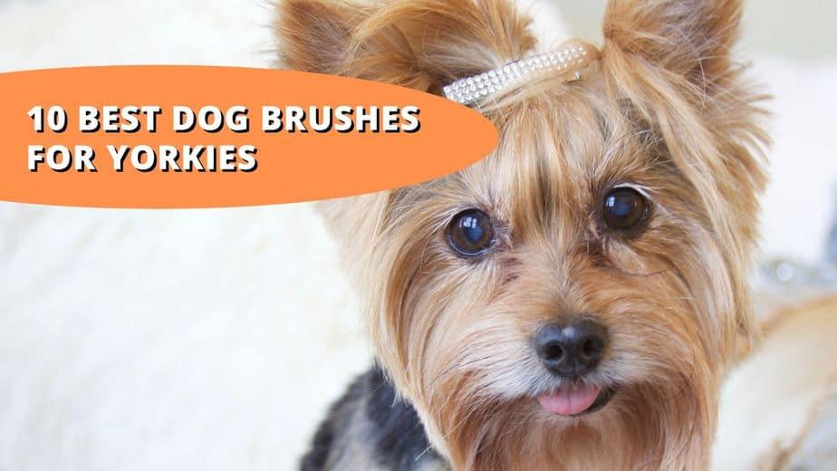 best brush for yorkie