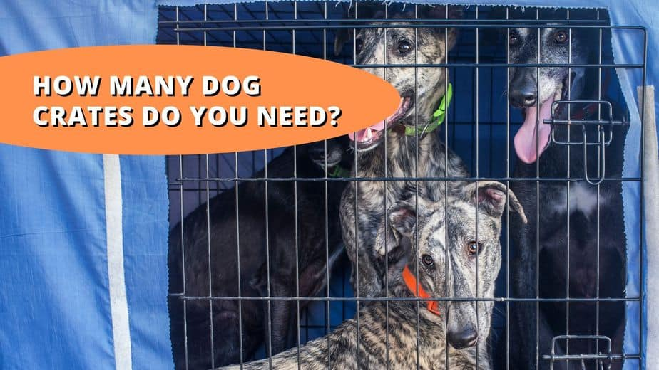how many dog crates do you need