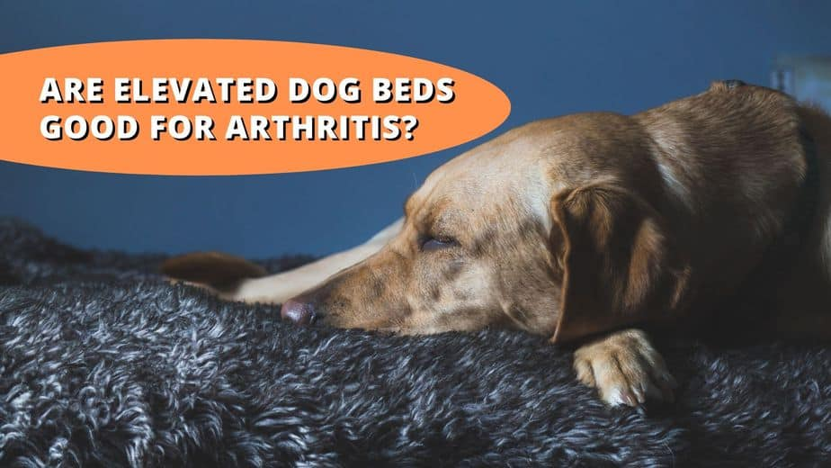 are elevated dog beds good for arthritis