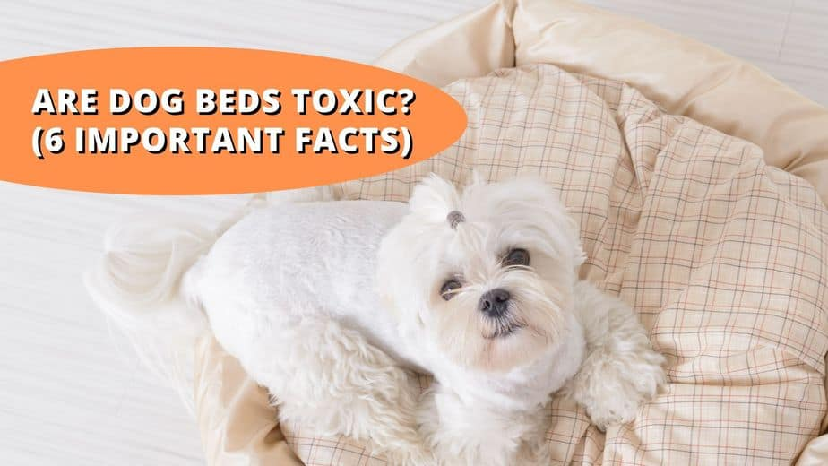 are dog beds toxic