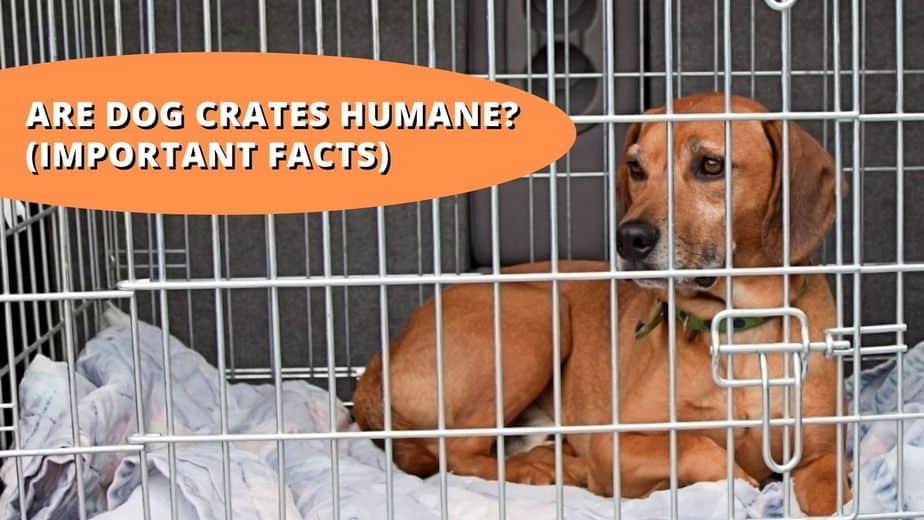 are dog crates humane