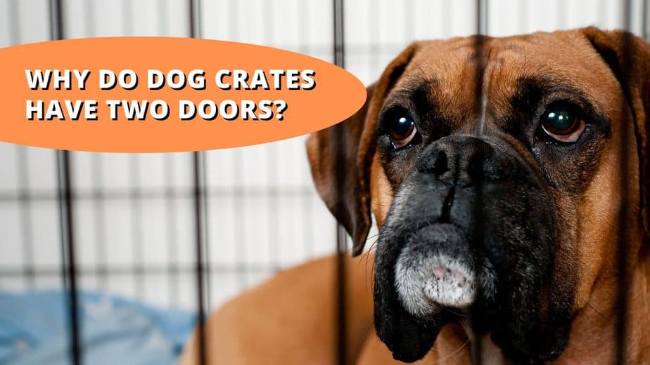 why do dog crates have 2 doors