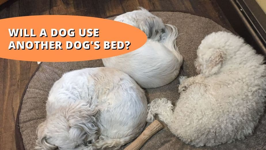 will a dog sleep on another dog's bed