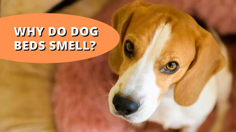 why do dog beds smell