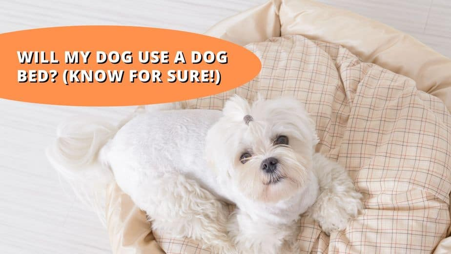 will my dog use a dog bed
