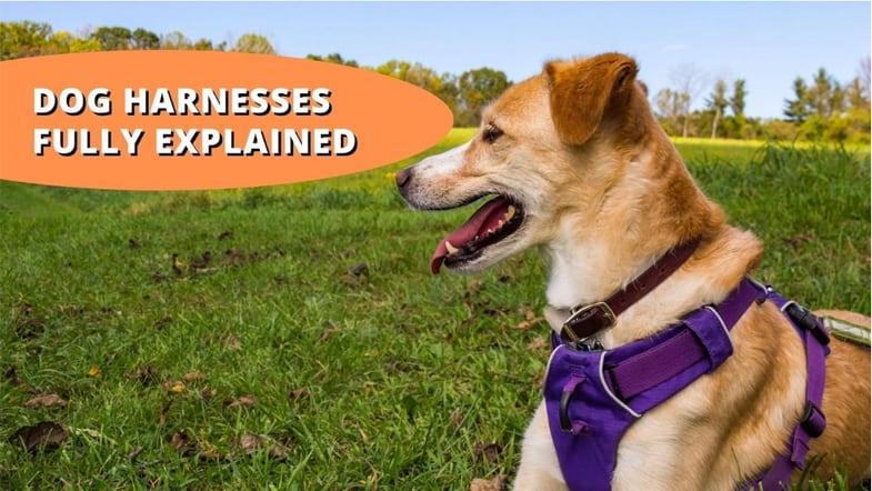 are dog harnesses cruel