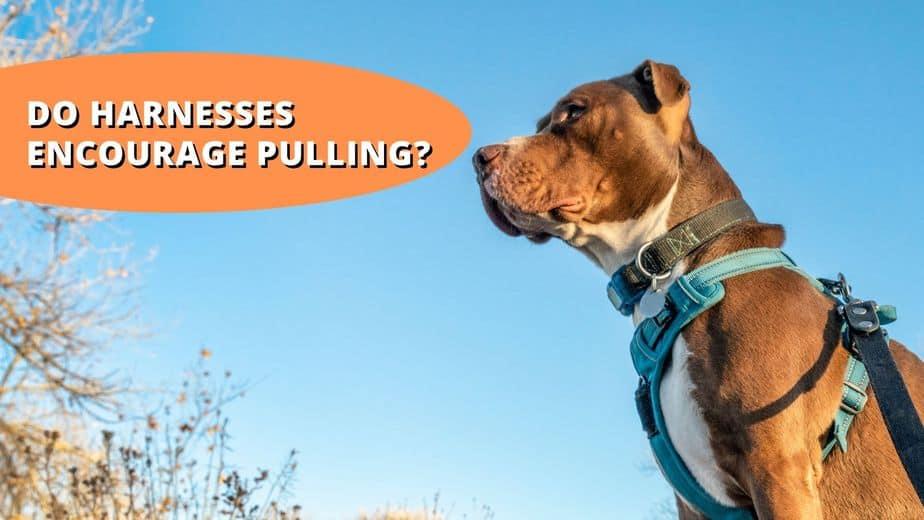 do dog harnesses encourage pulling
