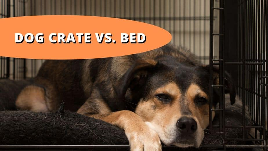 dog crate vs bed