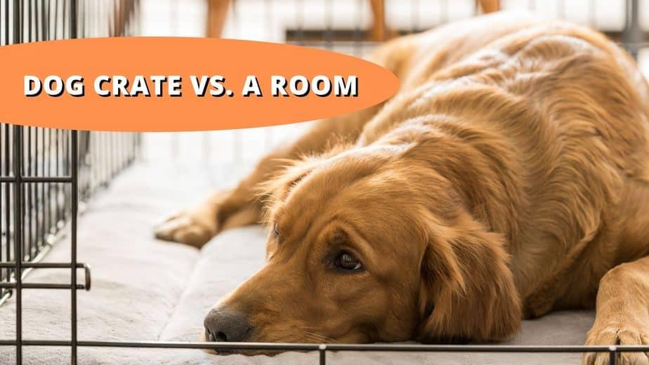 dog crate vs room