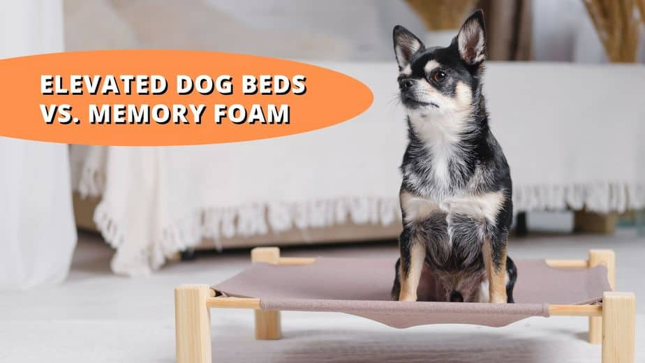 elevated dog bed vs memory foam
